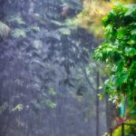 Rain forest Cebu City